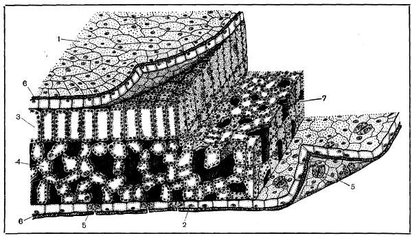 черчения и проектирования