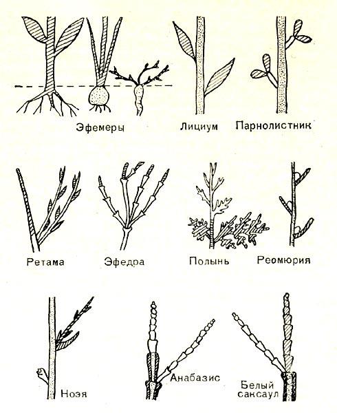 растений Ближнего Востока.