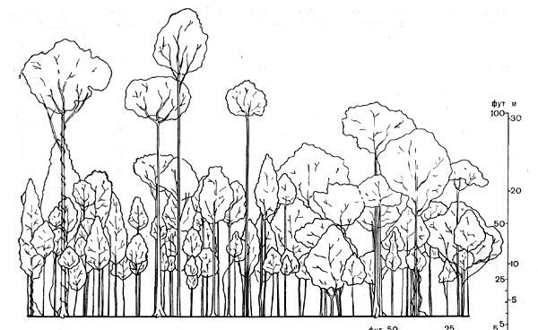 Изображена полоса леса длиной