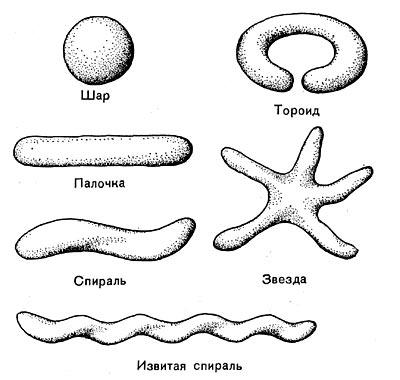 Основные формы бактериальных