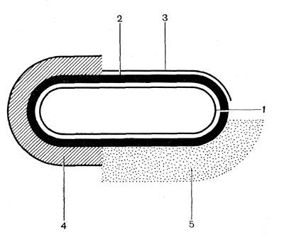 Группа клеток Seliberia