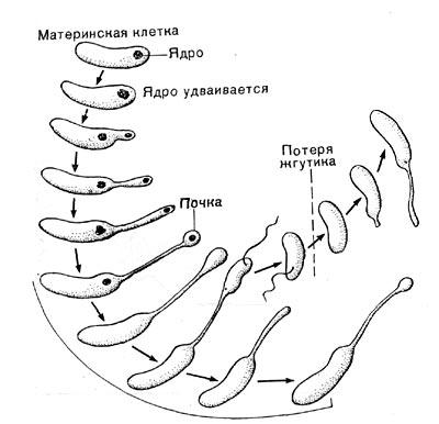 бактерий и актиномицетов
