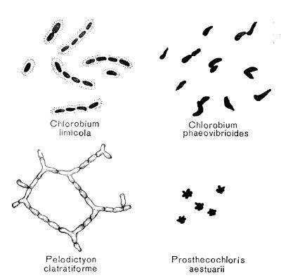 Фото бактерии: http://etsphoto.ru/foto-bakterii.html