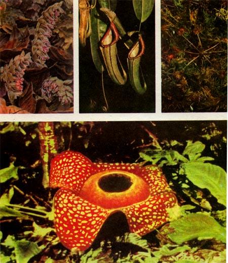 http://plant.geoman.ru/books/item/f00/s00/z0000000/pic/st111_16.jpg