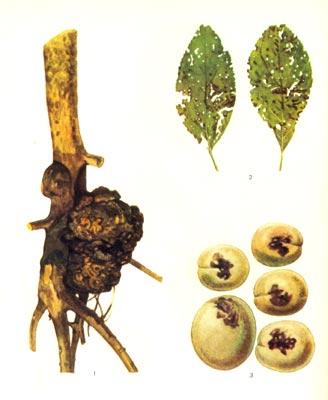 Картинкикомнатные растения