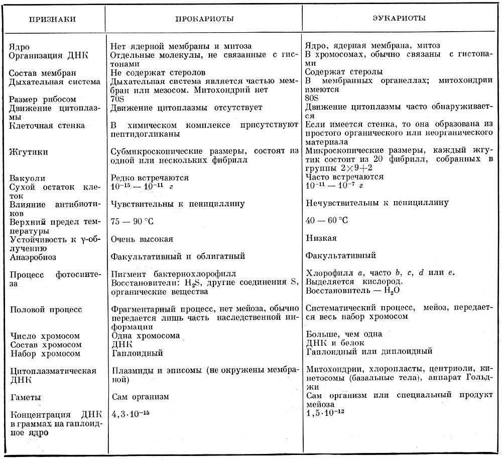 Морфология и систематика микроорганизмов реферат 5928